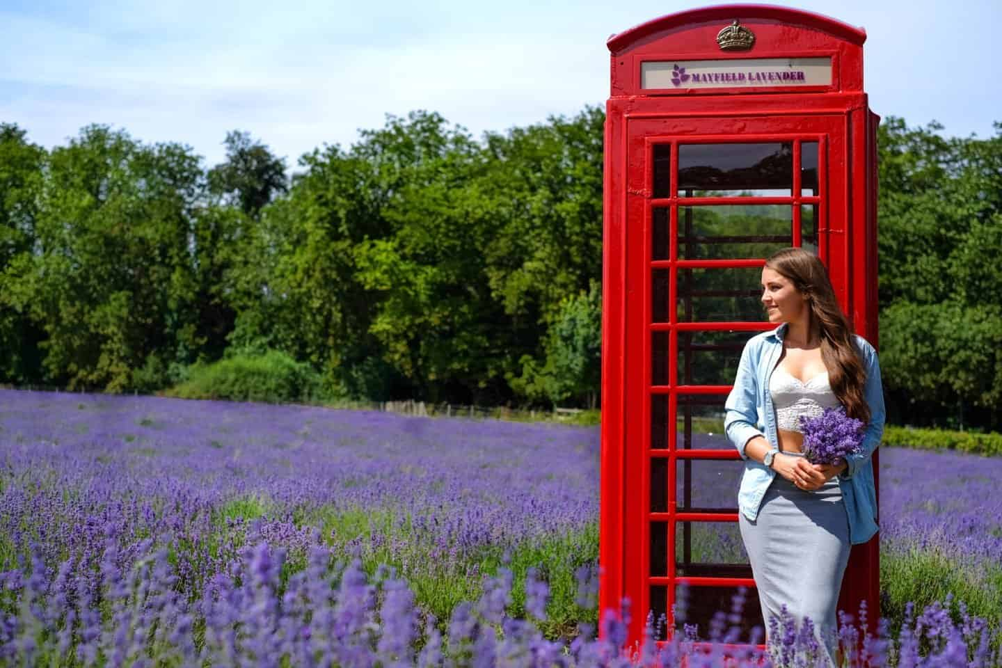 A red telephone box amongst purple lavender during the summer in the UK