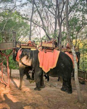 Elephants in Cambodia