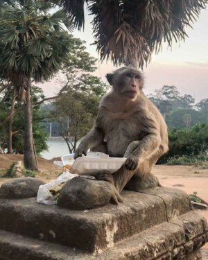 Monkey stole food at Angkor Wat