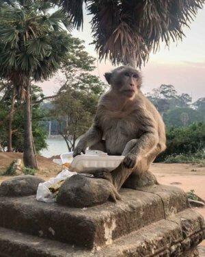Monkey stole food at Angkor Wat