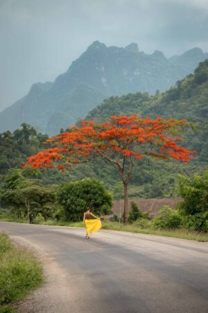 Orange tree blossoms against backdrop of mountains in rural Laos