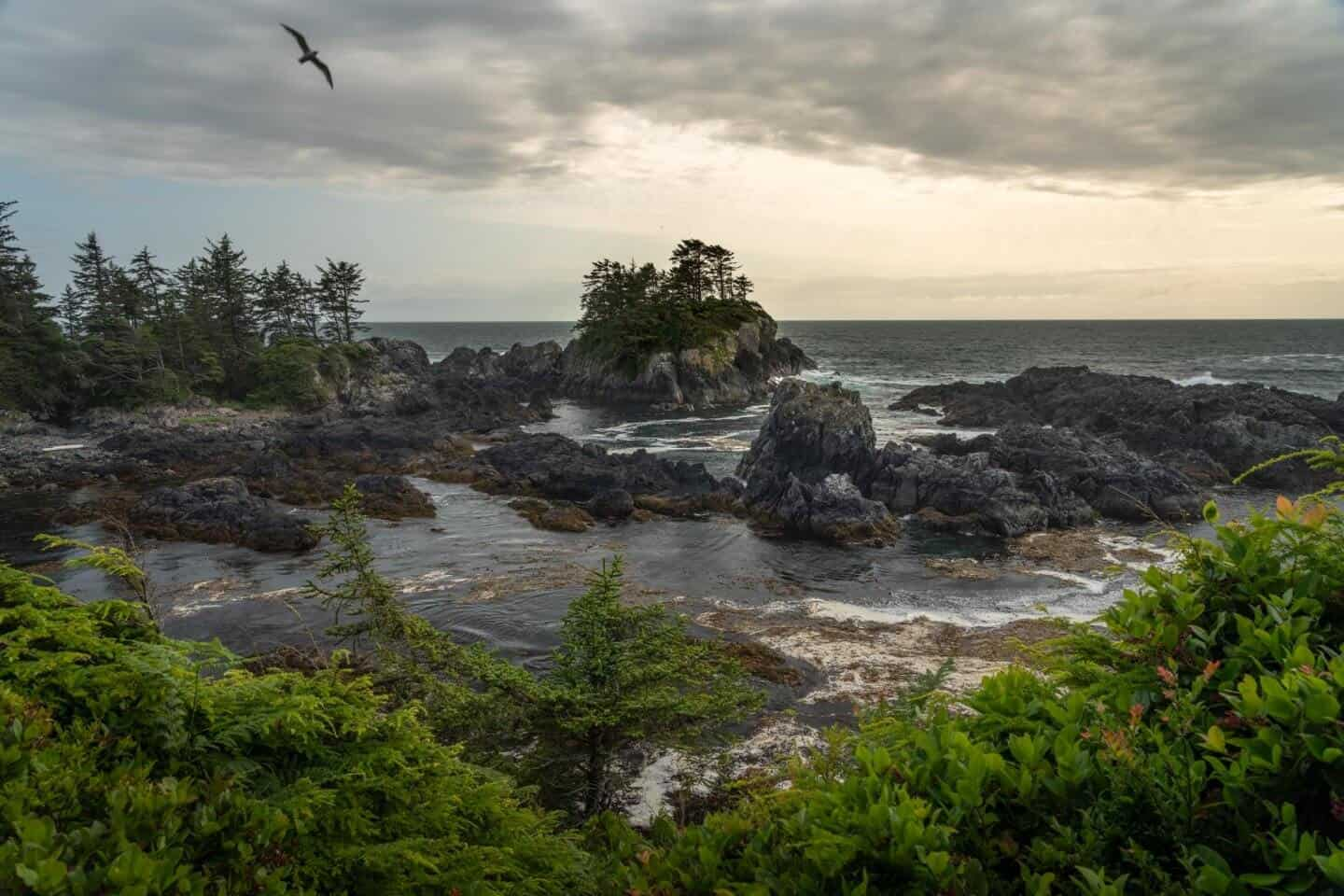 Amphitrite Point Trail is the best hike in Ucluelet... maybe all of Vancouver Island!