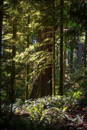 Cathedral Grove (aka MacMillan Provincial Park) is an enchanted forest on Vancouver Island.