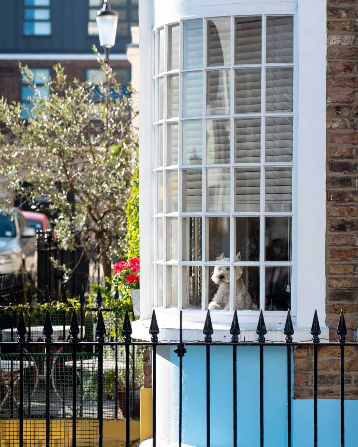 Notting hill cute dog in a window