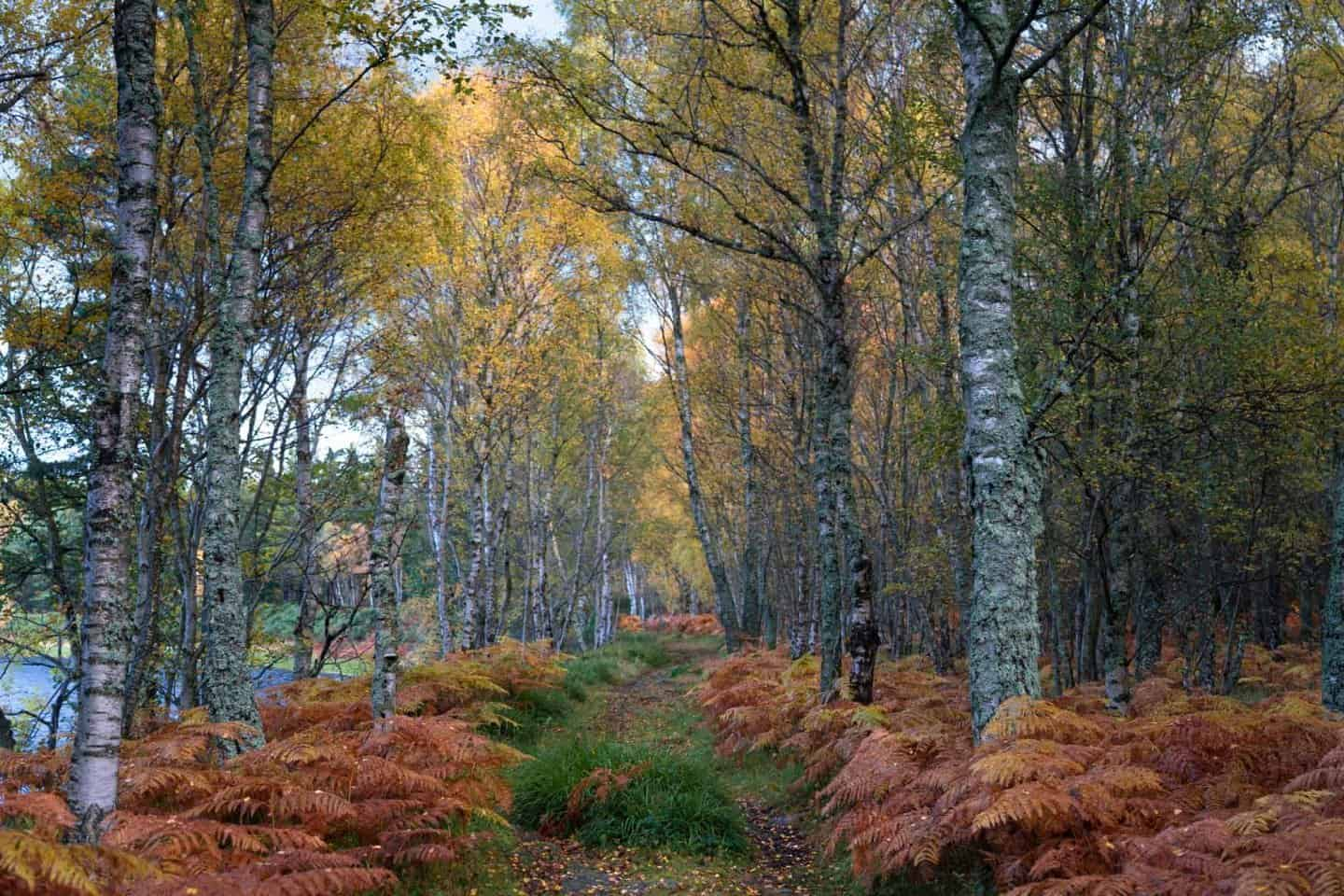 Autumn is a great time to spend 10 days in Scotland for the fall colors that flourish from floor to ceiling in Cairngorms National Park.