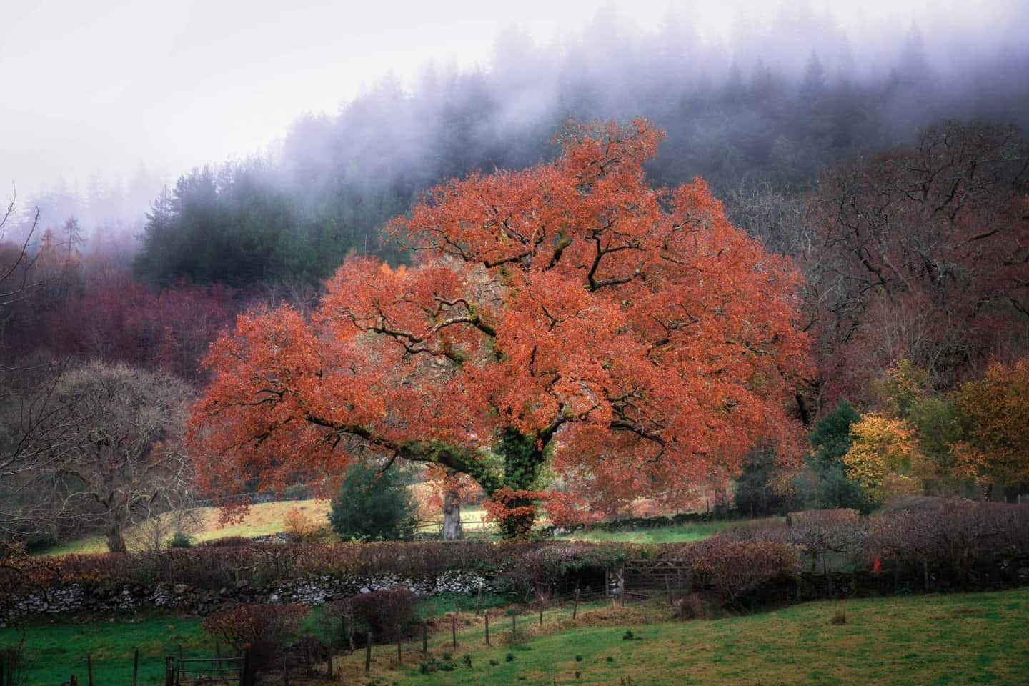 Some late-Autumn magic greeted us on the way to Fairy Glen.