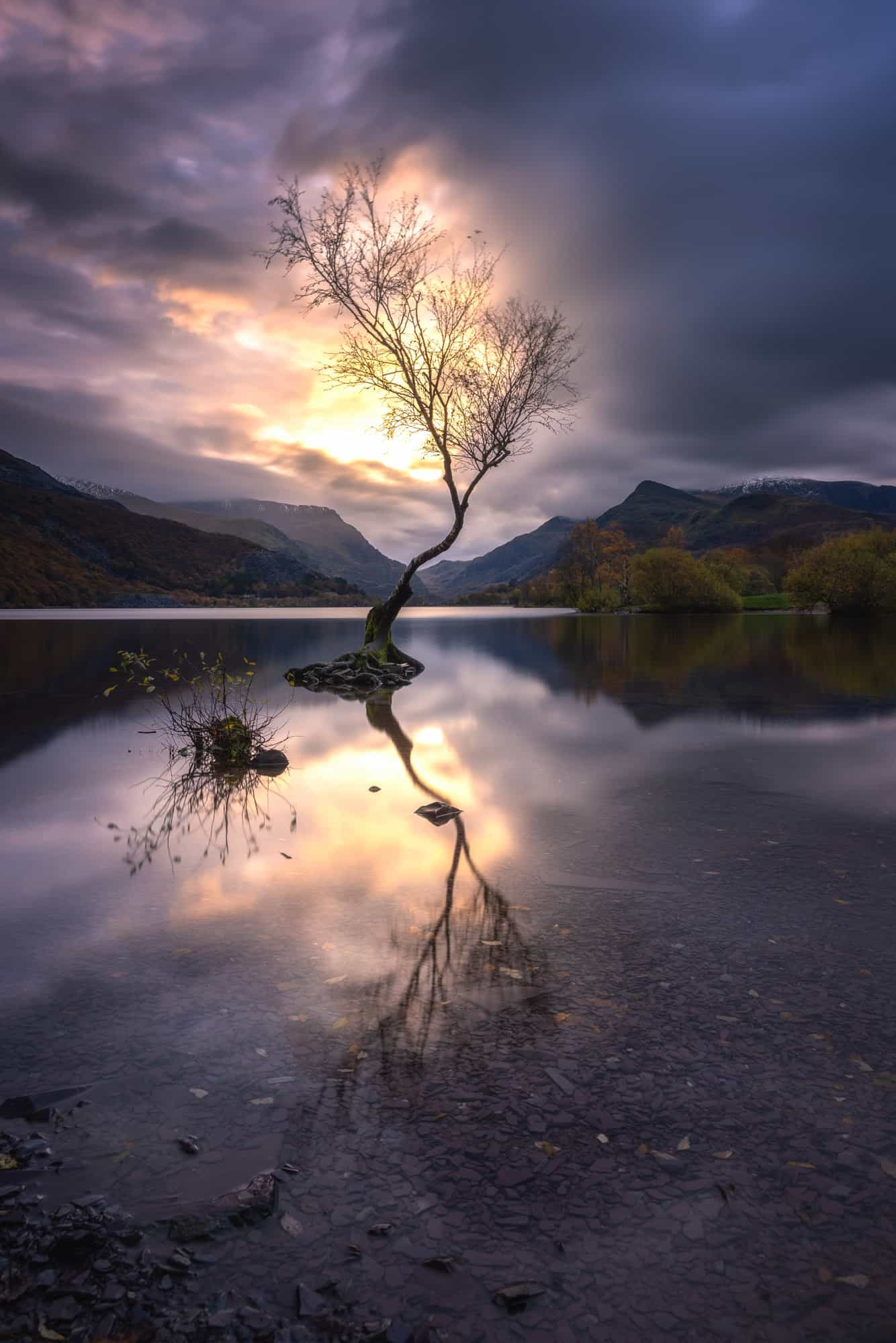 The first sunrise of 3 days in Snowdonia is at the Lonely Tree on Llyn Padarn.