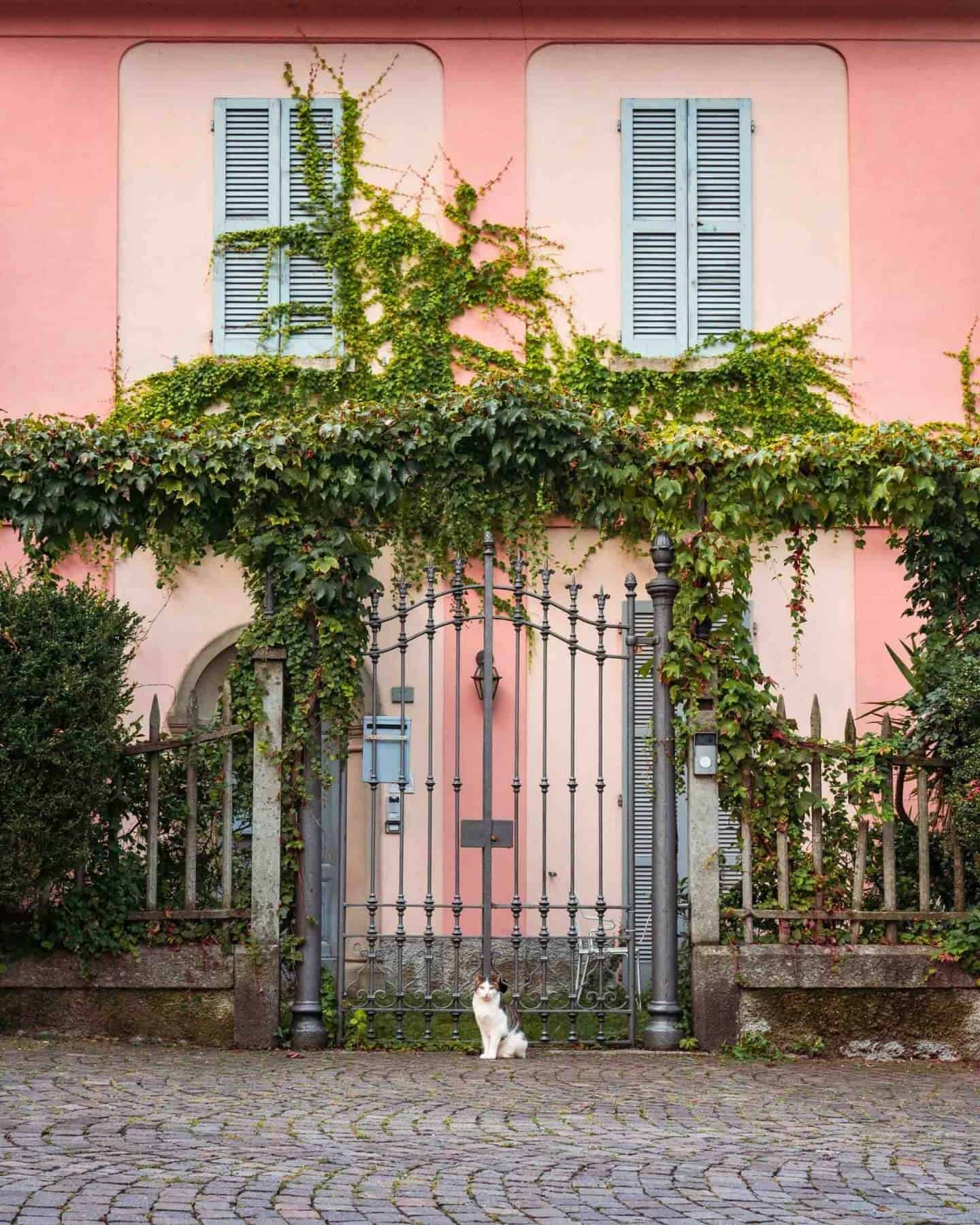 Cat in front of a gate at Piazza San Giorgio, Varenna, Lake Como.