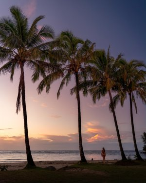 A palm tree row adds tropical vibes to the stunning colors of a Kauai sunset.