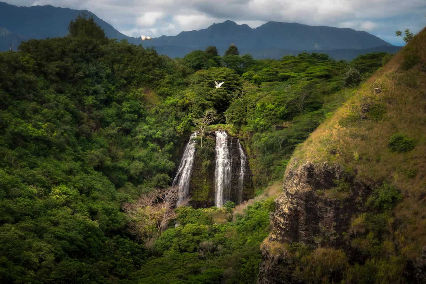 Opaeka'a Falls is one of the most popular waterfalls on your 7 day Kauai itinerary.