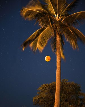 A blood moon and palm was a lucky surprise on our itinerary for Kauai, captured in Polihale State Park