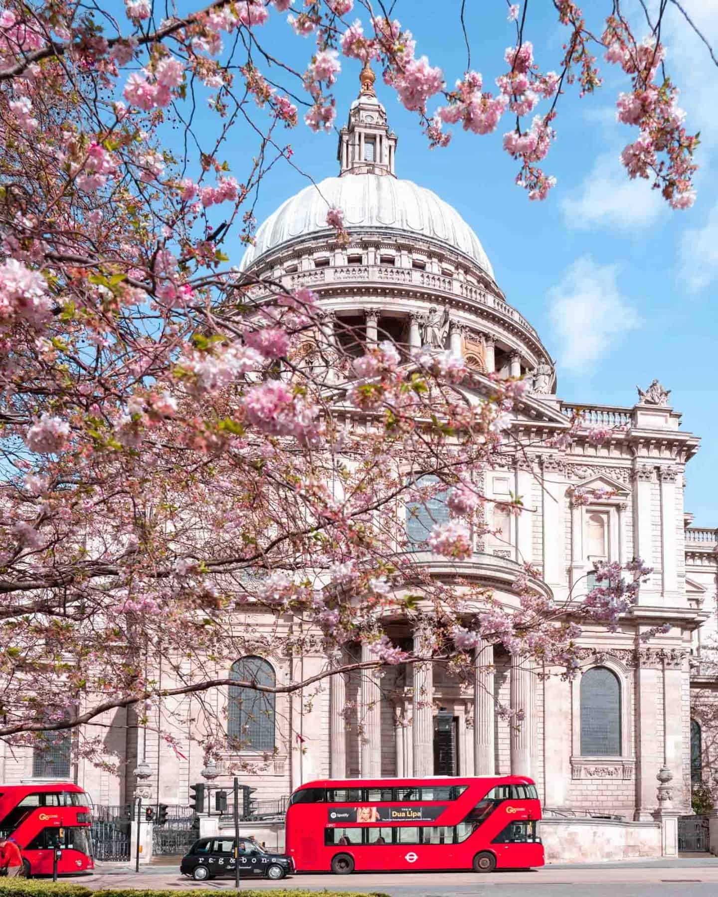 Cherry blossoms frame St Pauls with iconic London red buses and a black taxi in front