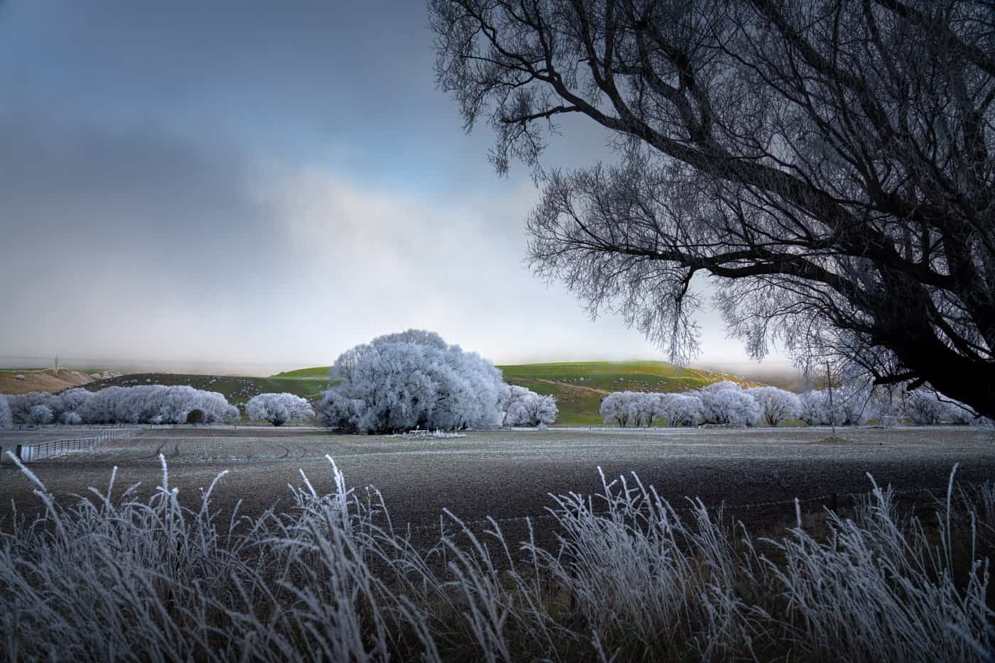 Stopping for a frosty morning photo on the drive from Queenstown to Milford Sound.