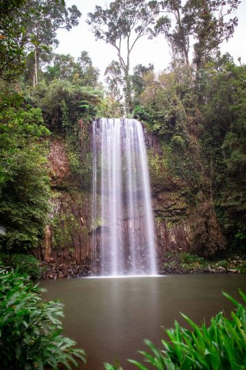 Millaa Milla Falls is the most famous of the three waterfalls on the Cairns Waterfalls Circuit.