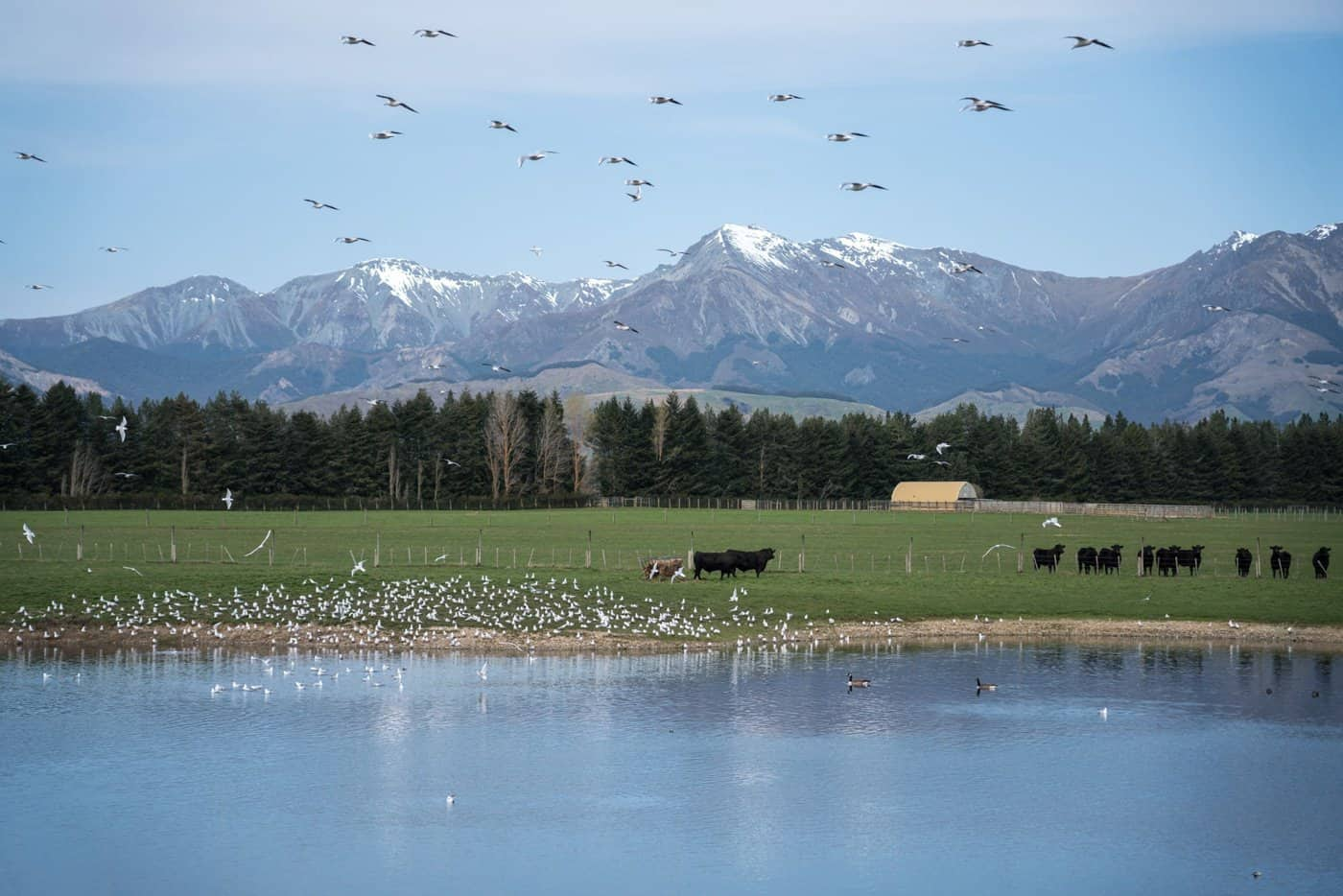 Spring fever gets the wildlife excited in New Zealand in November.