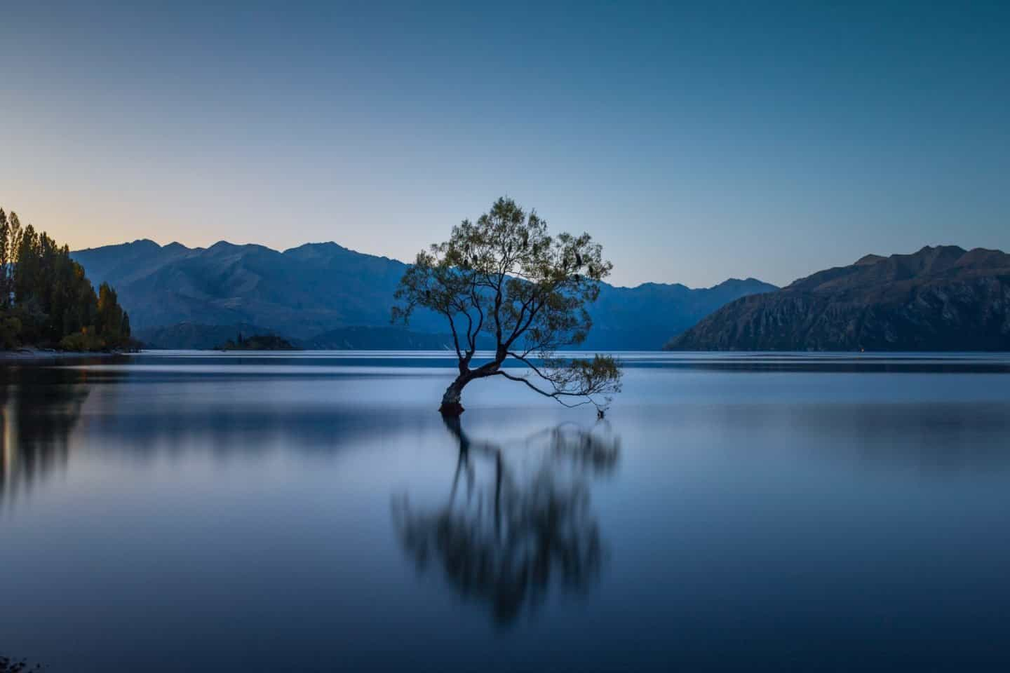 Day 5 on your itinerary will require another early start; you may as well shoot sunrise at That Wanaka Tree!