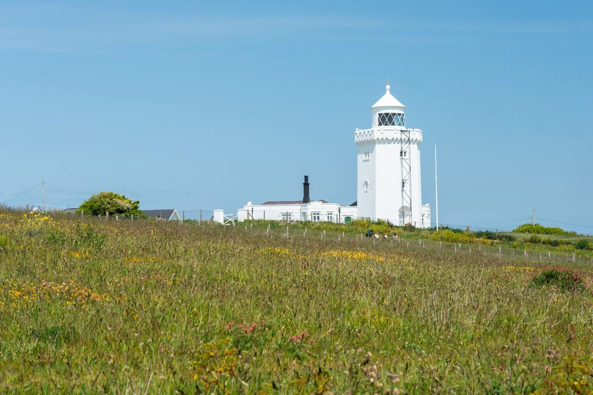South Foreland Lighthouse at the White Cliffs of Dover with a field of wildflowers in the foreground