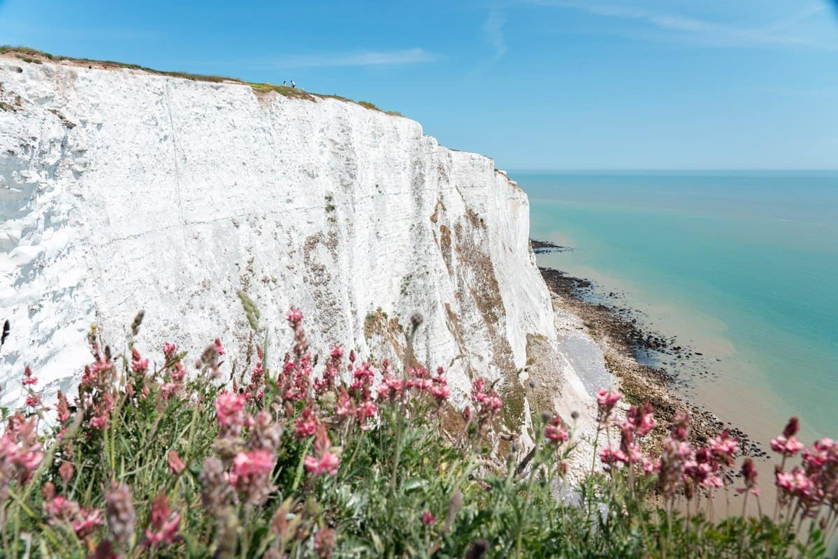 Pink wildflowers in the foreground with the White Cliffs of Dover and turquoise waters in the background.