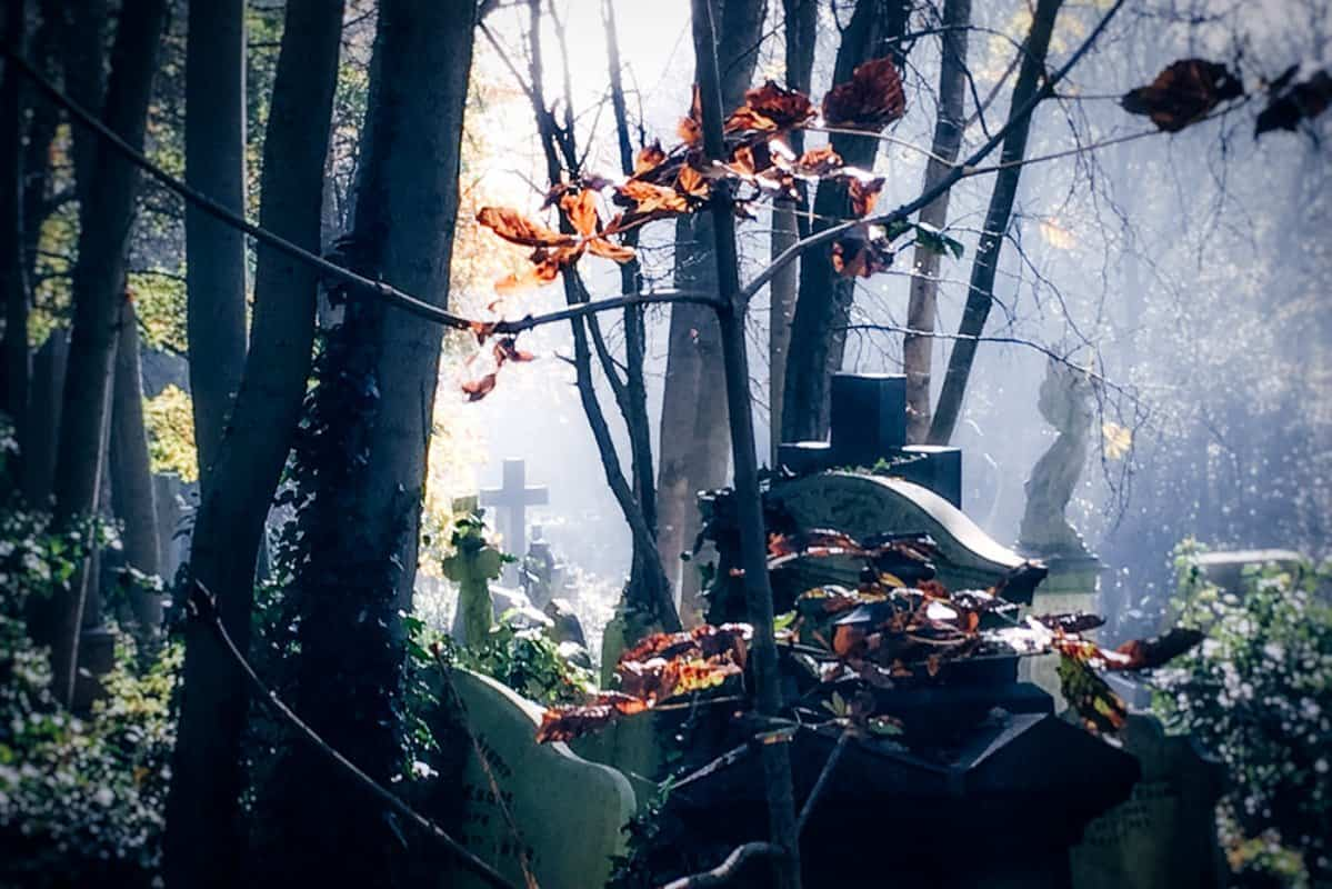 A grave amidst a tangle of trees at Highgate Cemetery London