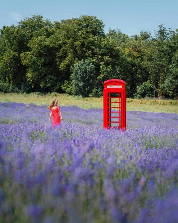 A red telephone box amongst a sea of purple lavender at Mayfield Lavender Farm, a non touristy hidden gem in London