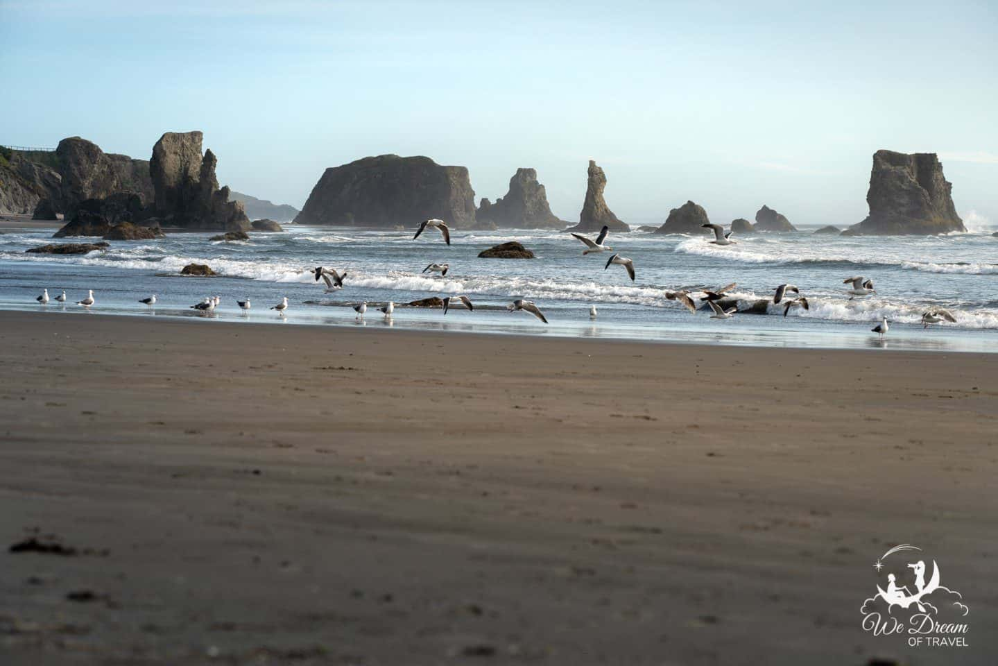 Seagulls take flight on the coast of Bandon, OR