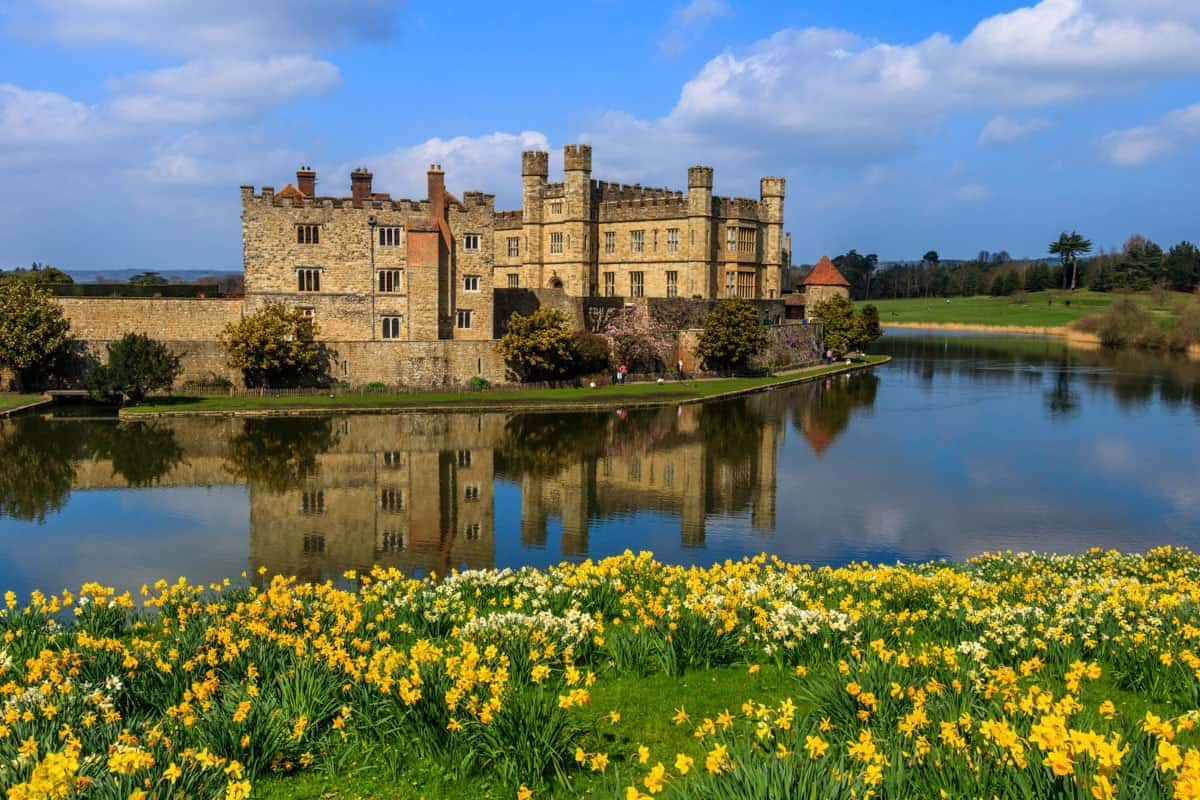 Leeds Castle reflected in the moat with daffodils in the foreground