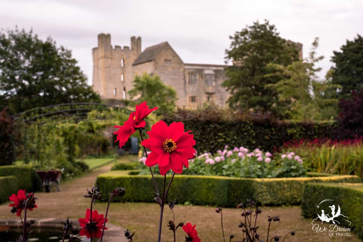 A beautiful red flower in Helmsley Walled Gardens with Helmsley Castle behind it