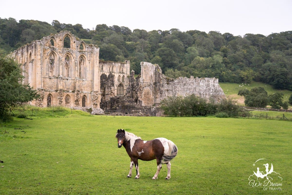 A horse in front of the ruins of Rievaulx Abbey