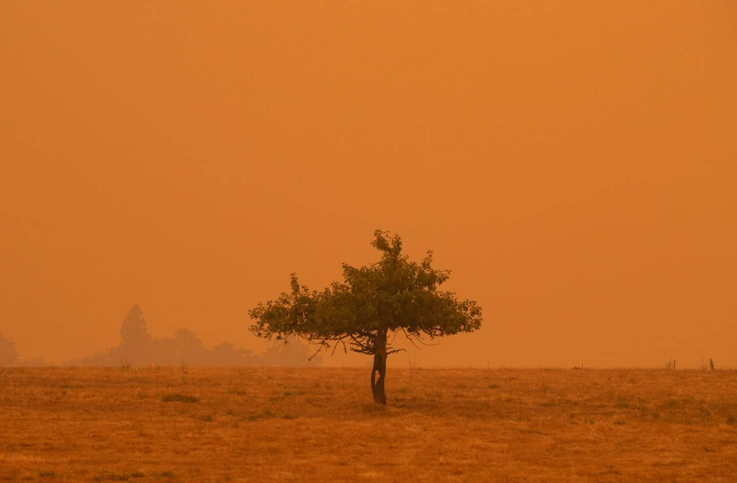 """This orange earth photo was taken in broad """"daylight."""""""