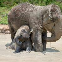Elephant Wildlife Photography Greeting Cards
