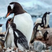 Penguin Wildlife Photography Greeting Cards