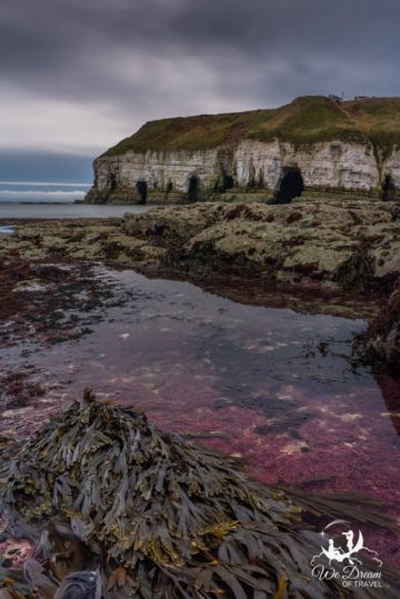 Otherworldly greens and purples show up during low tide at Thornwick Bay.