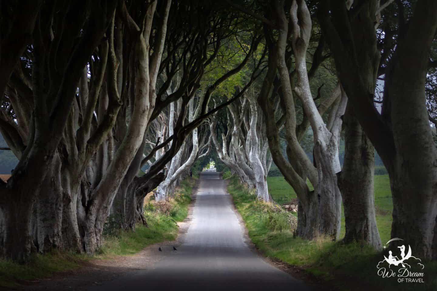 "One of the few ""spooky"" dream destinations to make the list is the enchanted Dark Hedges of Northern Ireland."