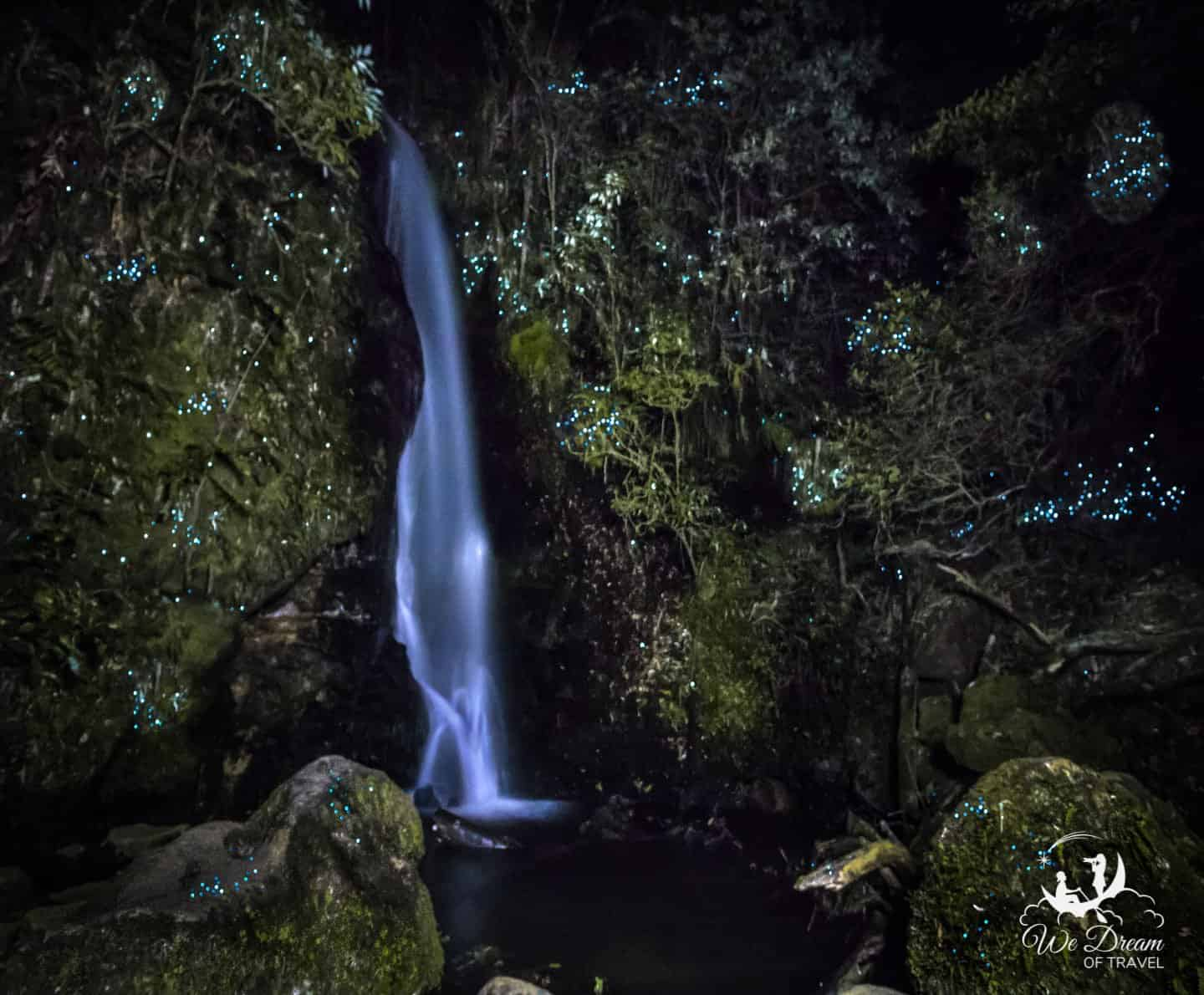Glow worms surround a small but beautiful waterfall in McLaren Park in New Zealand.