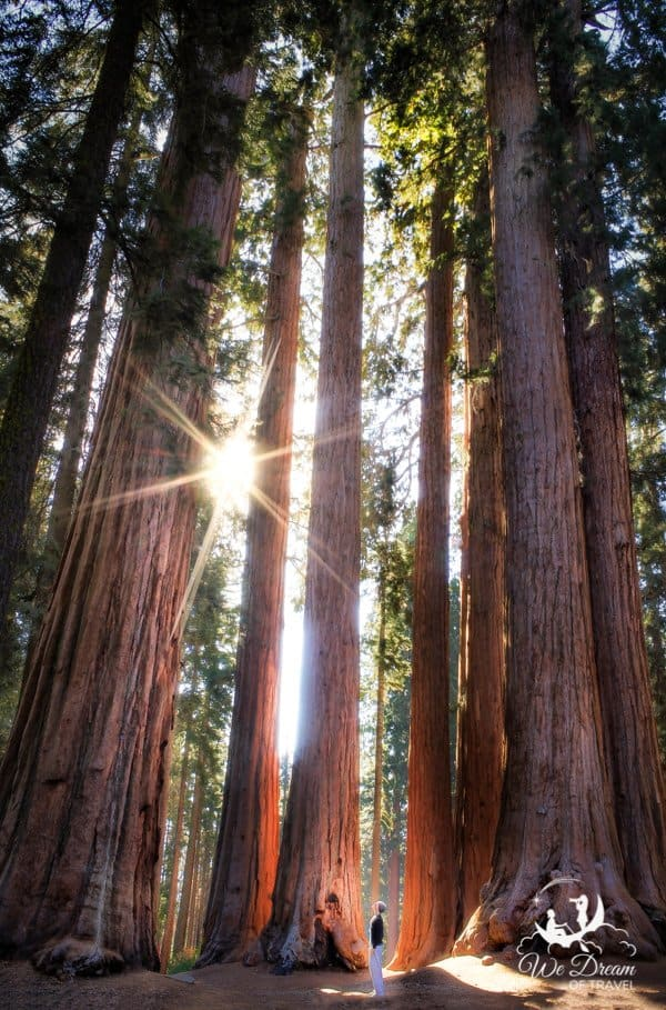 Consider including a short but challenging hike to see the giant sequoias at Tuolumne Grove on your Yosemite itinerary.