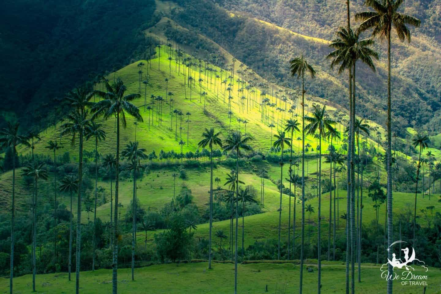 "Walk amongst the outstretched ""wax palms"" of the Valle De Cocora, aka Cocora Valley, in Colombia."