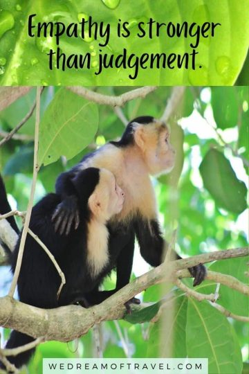 """Travel lesson #18  """"Empathy is stronger than judgement."""" Text overlaying an image of two monkeys hugging in a tree."""