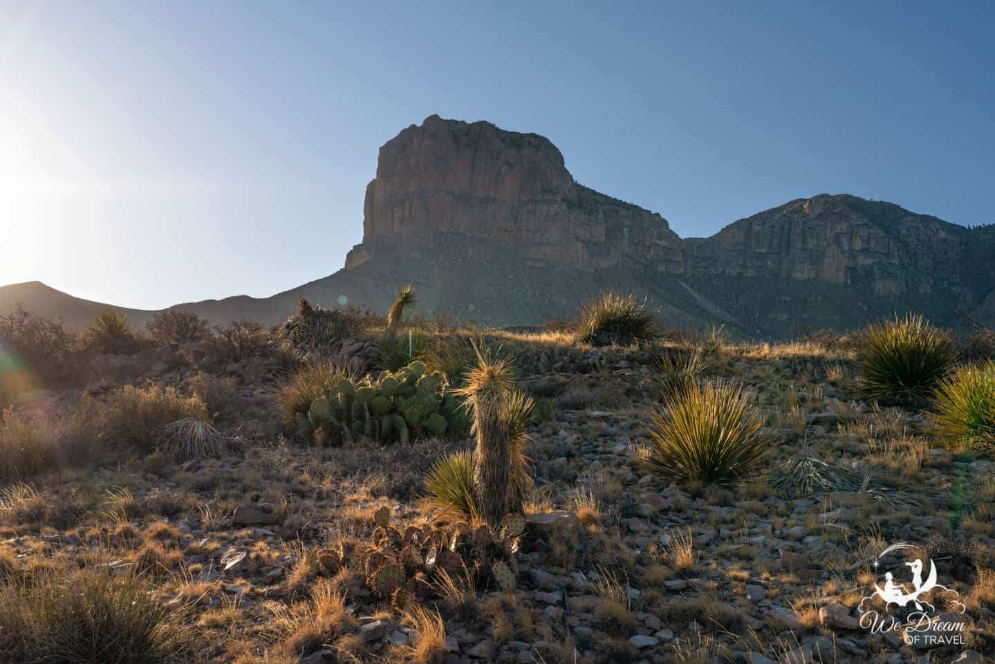 Golden light on a variety of desert cacti taken from El Capitan Trail in Guadalupe Mountains NP.