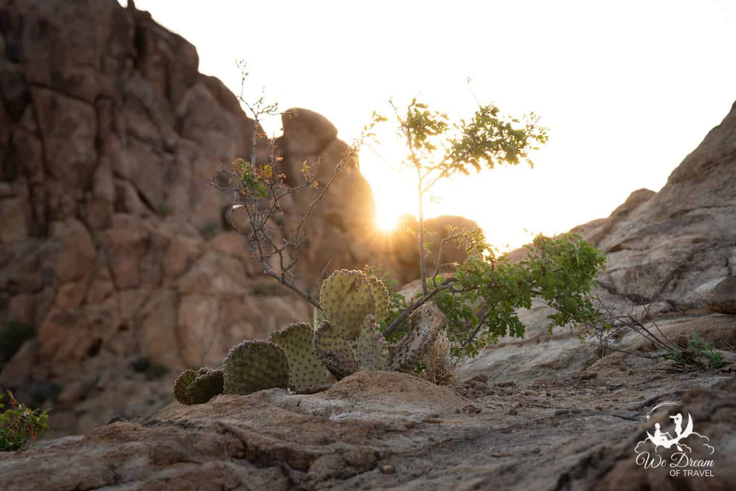 Golden Hour photography featuring a desert cactus in Big bend NP.