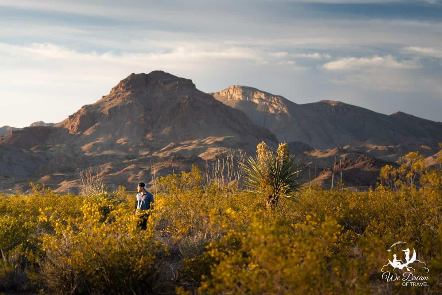 Enjoying a golden moment somewhere in the beautiful desert.