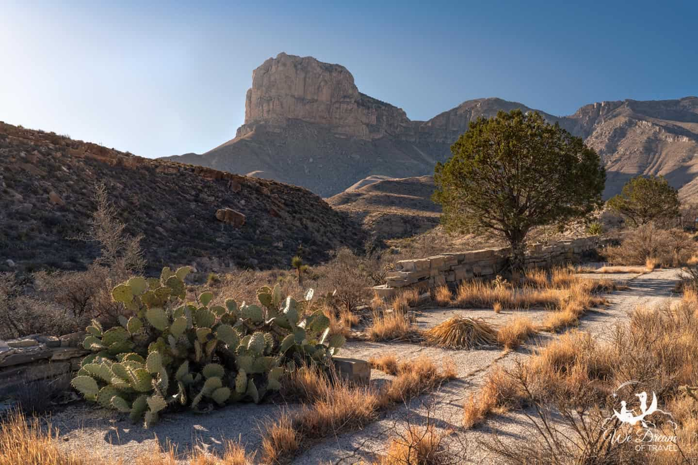 The desert has begun reclaiming the road at the beginning of the Guadalupe Canyon Trail.