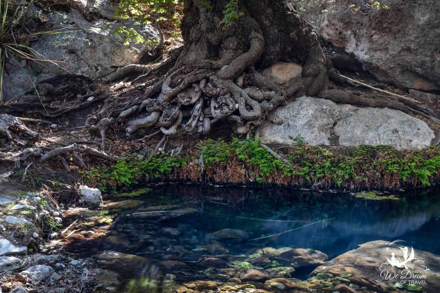 The Smith Spring offers a desert oasis in the Guadalupe Mountains.