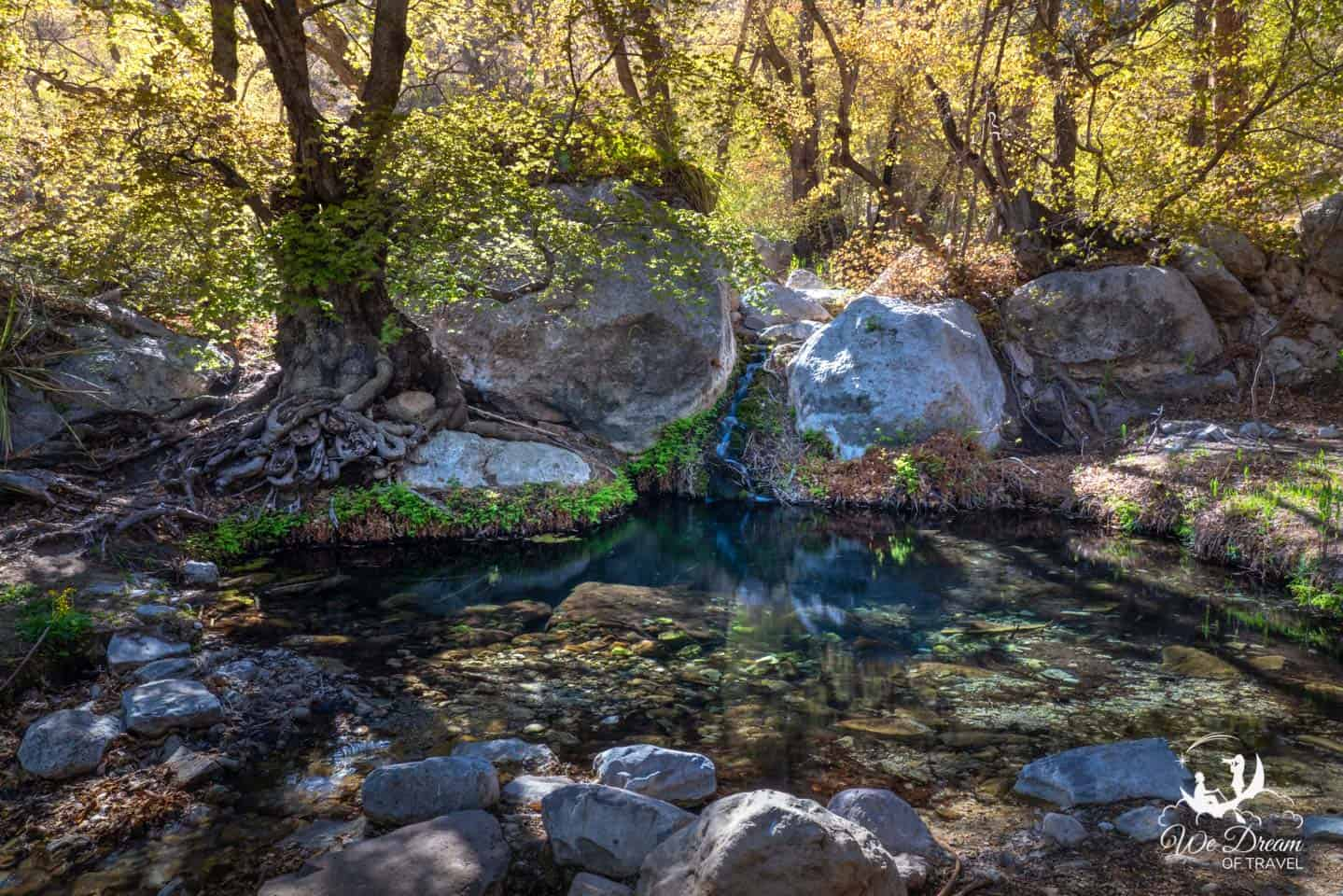 The short hike to Smith Spring was my favorite in Guadalupe Mountains NP.