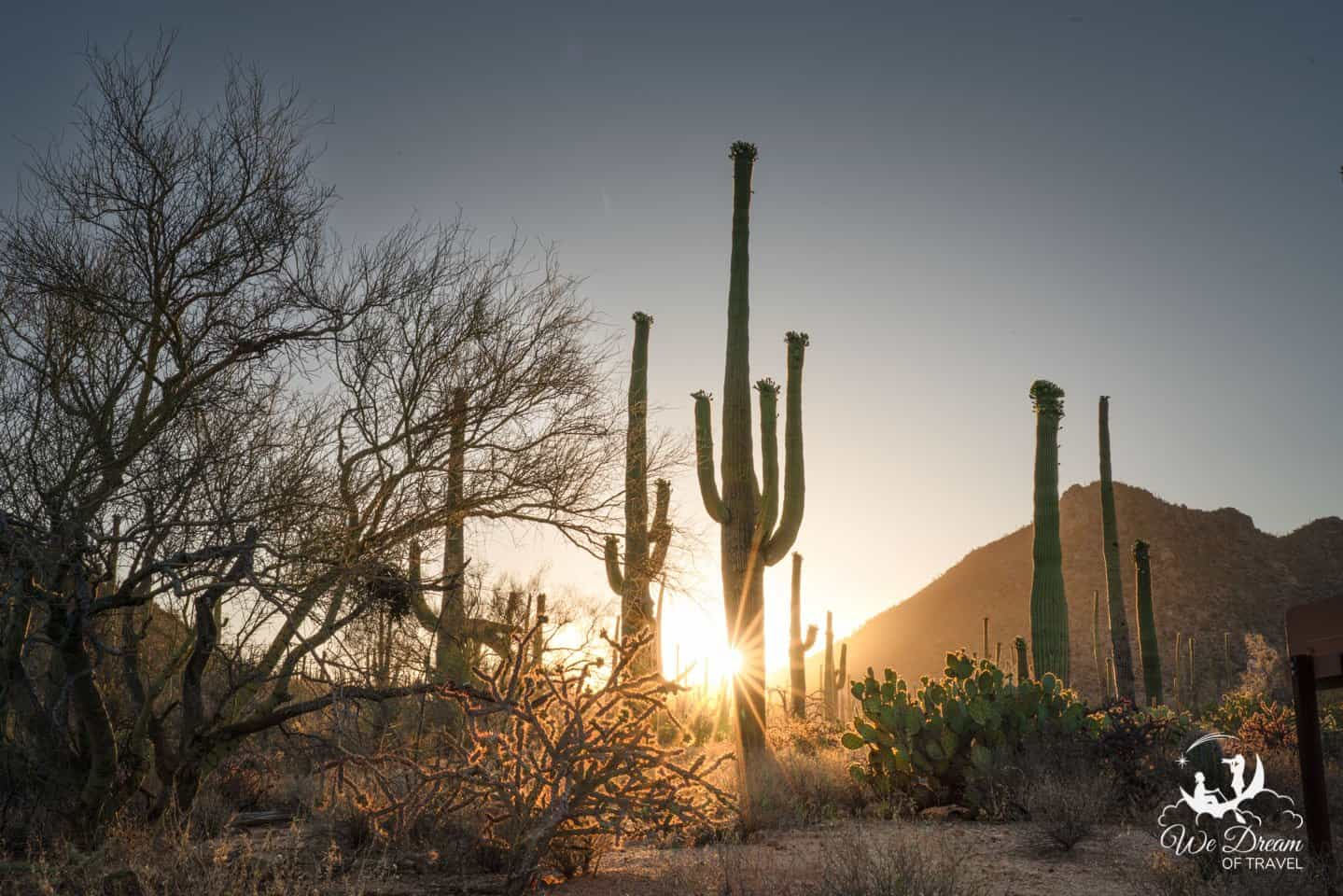 Photographing sunrise from the Sus Picnic Area along the Bajada Scenic Loop in Saguaro West.