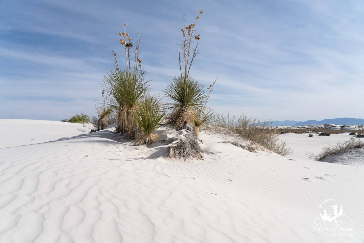 Learn all about desert life on the Dune Life Nature Trail.
