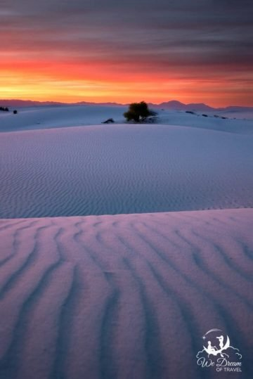 One more White Sands sunset photo of my favorite tree, with natural leading lines directing the visual journey.