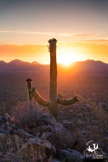 A saguaro cactus enjoys the sunset from its perch at Valley View Overlook.