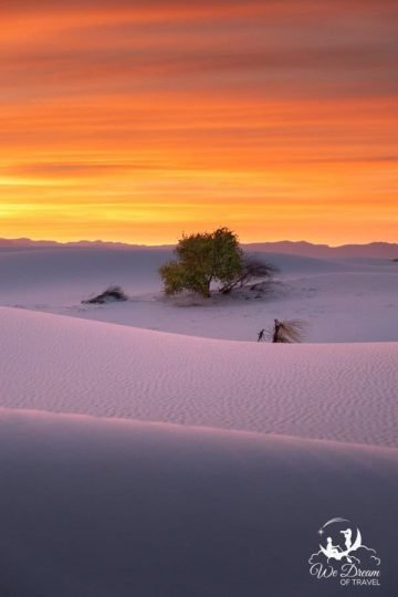 Another sunset picture from White Sands National Park featuring my favorite tree.