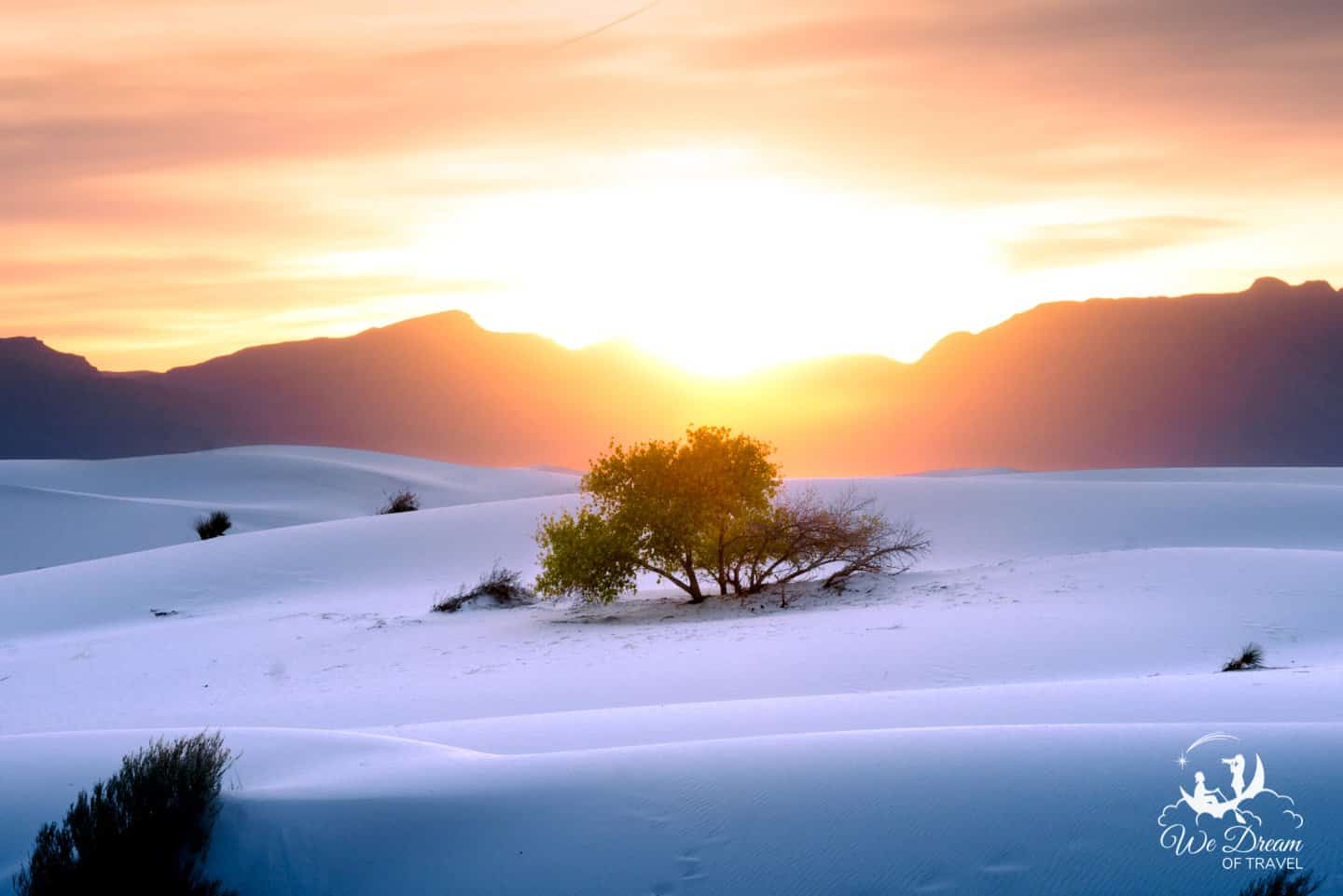 My favorite tree in White Sands NP, posing for this sunset picture.