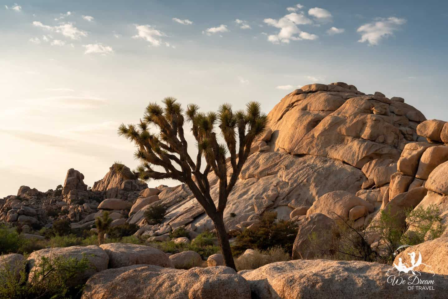 Golden hour photography from Joshua Tree National Park.